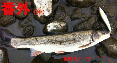 419yasu_3s.jpg